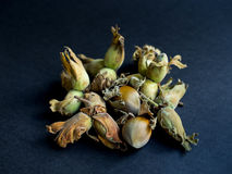 Fresh hazelnuts in a pile on dark background Royalty Free Stock Image