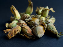 Fresh hazelnuts in a pile on dark background Royalty Free Stock Photos