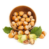 Fresh hazelnuts in wooden pot Stock Photos