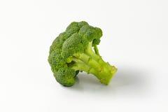 Fresh head of broccoli Stock Photography