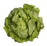 Fresh head of lettuce Stock Photo