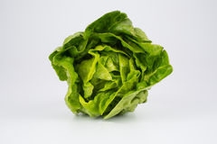 Fresh head of lettuce Royalty Free Stock Photo