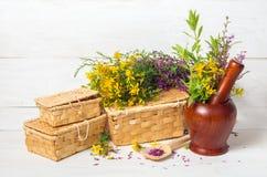Fresh healing herbs Royalty Free Stock Photos