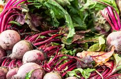 Fresh healthy beetroots Stock Images