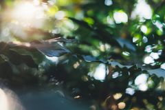 Fresh healthy bio background blur natural with abstract blurred foliage and bright summer flare sunlight backdrop in the park, cop. Yspace for text or stock images