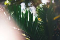 Fresh healthy bio background blur natural with abstract blurred foliage and bright summer flare sunlight backdrop in the park, cop. Yspace for text or stock photography