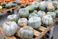 Fresh healthy bio green pumpkins on farmer agricultural market at autumn
