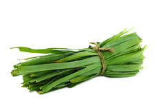 Fresh healthy bio leek. Herbs  on white background Royalty Free Stock Photography