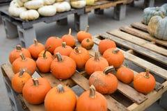 Fresh healthy bio orange pumpkins on farmer agricultural market at autumn