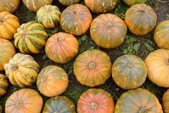Fresh healthy bio pumpkins lying on the ground on farmer agricultural market at autumn