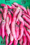 Fresh healthy bio radish on  farmer  market. Fresh healthy bio radish on German farmer agricultural weekly market Royalty Free Stock Photos