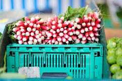 Fresh healthy bio radish. On Paris farmer agricultural market Stock Images
