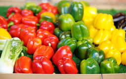 Fresh healthy bio red, green and yellow paprika Royalty Free Stock Photo