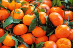 Fresh healthy bio tangerine Stock Images