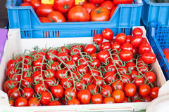 Fresh healthy bio tomatoes on market Stock Photo