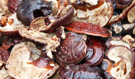 Fresh healthy brown mushrooms closeup.  stock images