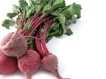 Fresh healthy bunch of beetroot. A fresh bunch of beetroot, ready to cook Royalty Free Stock Photos