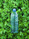Fresh&healthy drink. Small plastic bottle of clear mineral water in the natural very fresh  green leaves background Royalty Free Stock Photo