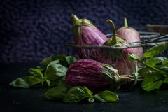 Fresh healthy eggplants. On dark background close up Stock Images