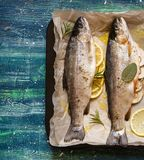 Fresh healthy fish Stock Photography