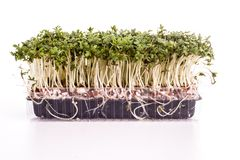 Fresh healthy Green Cress Royalty Free Stock Image