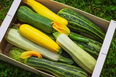 Fresh healthy green zucchini courgettes cucumber. In brown wooden box the open air on grass Stock Photo