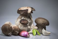 Fresh healthy happy family of mushrooms cep porcini boletus edulis with basil herb, garlic and shallot  Stock Photography