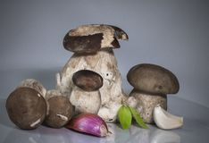 Free Fresh Healthy Happy Family Of Mushrooms Cep Porcini Boletus Edulis With Basil Herb, Garlic And Shallot  Stock Photo - 100267820