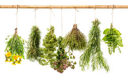 Fresh healthy herbs hanging isolated on white background. Rosemary, basil, thyme, oregano, marjoram, dandelion royalty free stock images