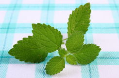 Fresh healthy lemon balm on checkered tablecloth, herbalism Stock Photos