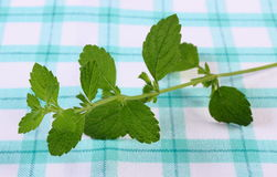 Fresh healthy lemon balm on checkered tablecloth, herbalism Royalty Free Stock Photo