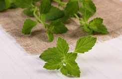 Fresh healthy lemon balm on white wooden table, herbalism Stock Photo