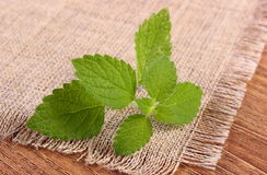 Fresh healthy lemon balm on wooden table, herbalism Royalty Free Stock Image