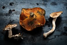 Fresh healthy mushrooms ready to be cooked royalty free stock image