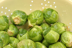 fresh and healthy organic brussels sprouts Stock Photography