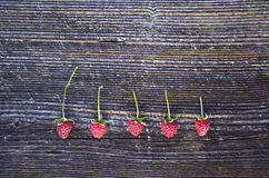 Fresh healthy raspberry berry on old wooden plank background Stock Photography