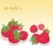 Fresh Healthy Red Raspberry Royalty Free Stock Image
