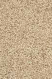 Sorghum Seed. Fresh and Healthy Sorghum Seed Stock Photography