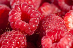 Fresh and healthy summer raspberries. Delicious, juicy and healthy raspberries filling the frame Stock Images