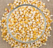 Sweet Corn Seed. Fresh and Healthy Sweet Corn Seed Stock Photography