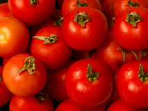 Tomato Fresh & Healthy  Stock Images