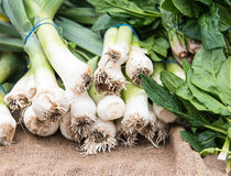 Fresh healthy welsh onion vegetables Stock Image
