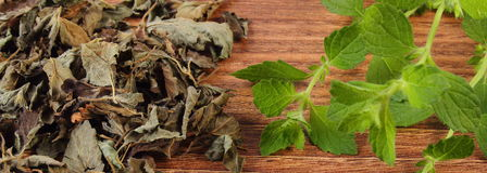 Fresh and heap of dried lemon balm on wooden table, herbalism Royalty Free Stock Image