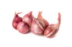 Fresh heap onions Stock Image