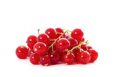 Organic Red Currants Stock Image
