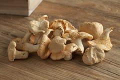 Fresh hedgehog mushrooms Stock Image