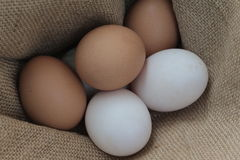 Fresh hens eggs and duck eggs. Shopping white and brown fresh hens eggs on my hand Royalty Free Stock Photos