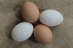 Fresh hens eggs and duck eggs. Shopping white and brown fresh hens eggs on my hand Royalty Free Stock Image
