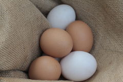 Fresh hens eggs and duck eggs. Shopping white and brown fresh hens eggs on my hand Royalty Free Stock Photography