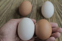 Fresh hens eggs and duck eggs. Shopping white and brown fresh hens eggs on my hand Stock Image